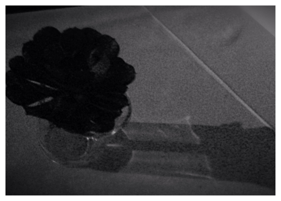 My own Black Rose, DrDinOz.com