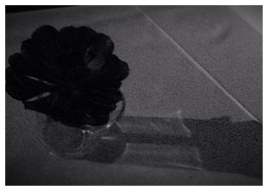 My own Black Rose, DrDinOz.com