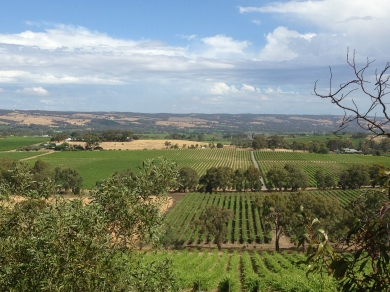 McLaren Vale vines, South Australia