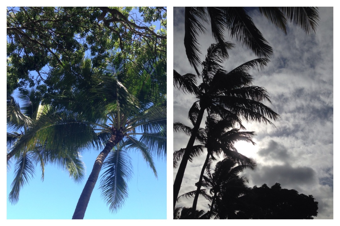 Palms in Noumea, New Caledonia