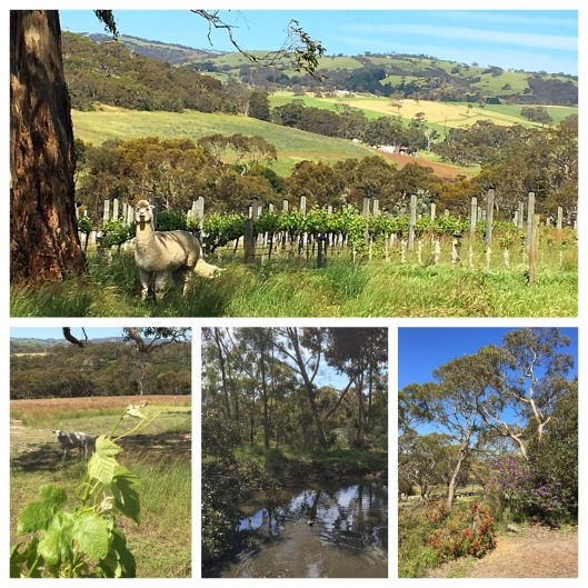 Allusion Wines, Southern Fleurieu