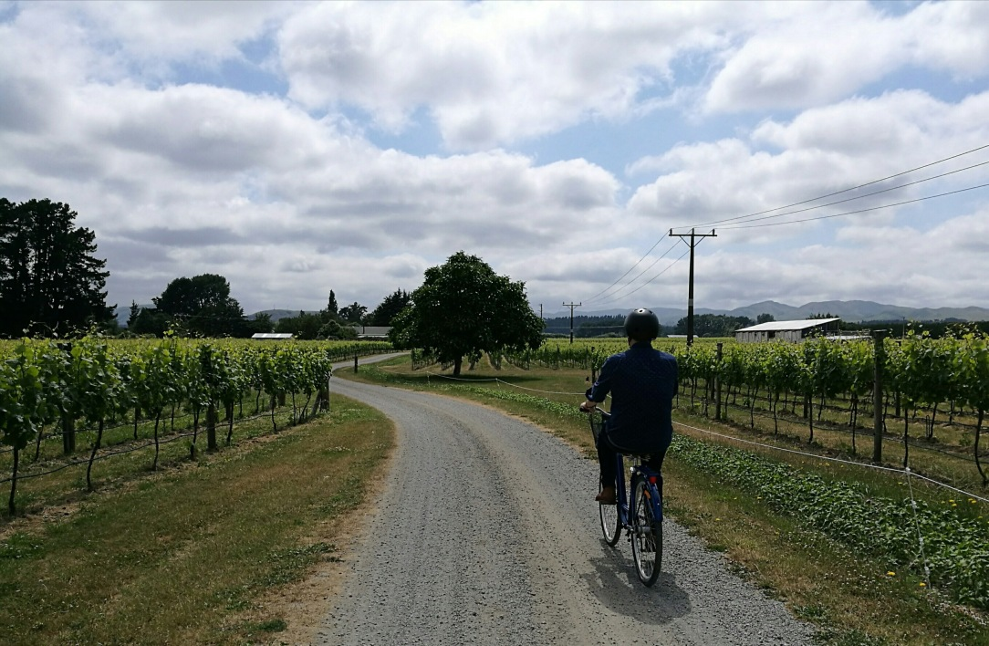 Bike wine tour, Martinborough, New Zealand