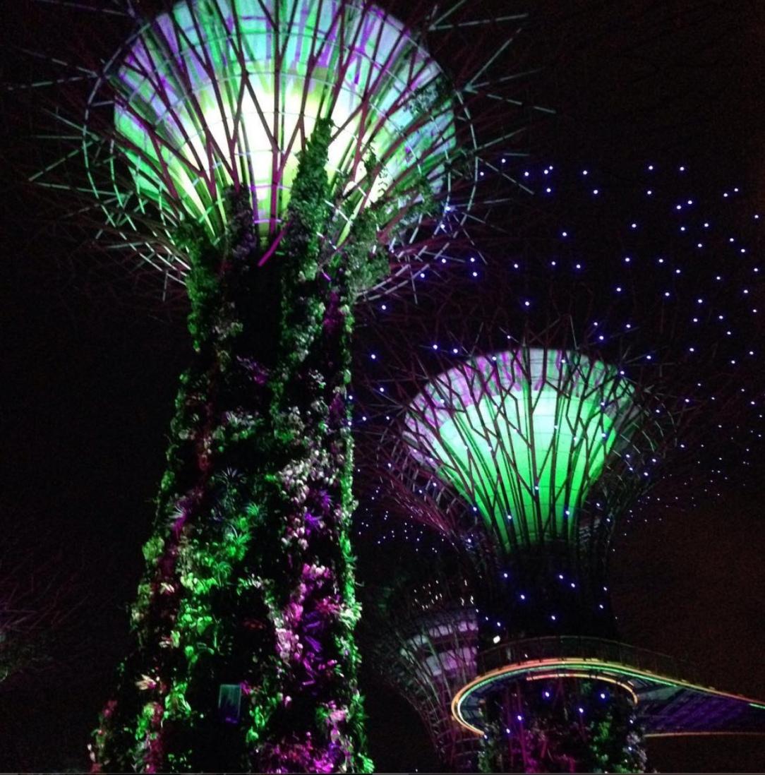 Singapore gardens.jpeg