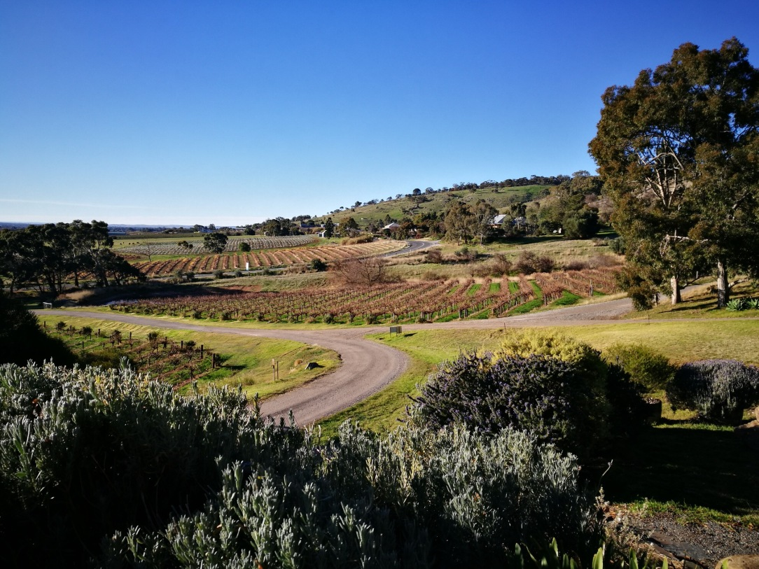 Barossa Valley at Bethany