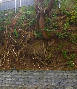 A nice root at Victoria Park Market, Auckland