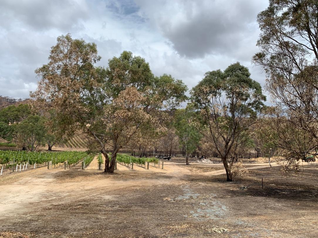 Petaluma Wines, Adelaide Hills