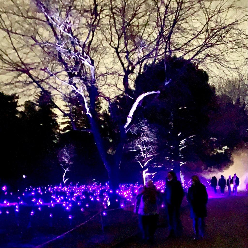 Fields of light flowers Illuminate Life Cycles at Adelaide Botanic Gardens