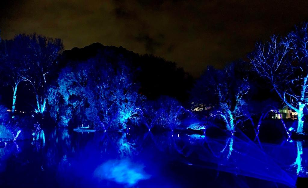 Blue lit lake  at night Adelaide Botanic Gardens